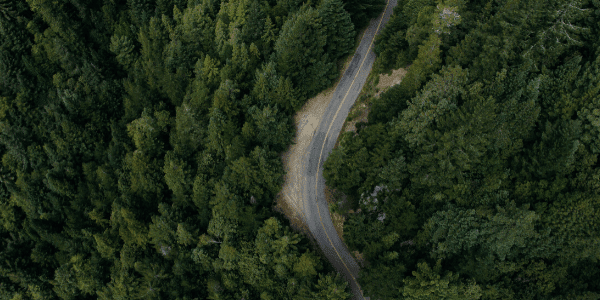aerial view of a forest with a single road running through it